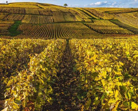 Besuch bei Gosset - Champagne im Herbst