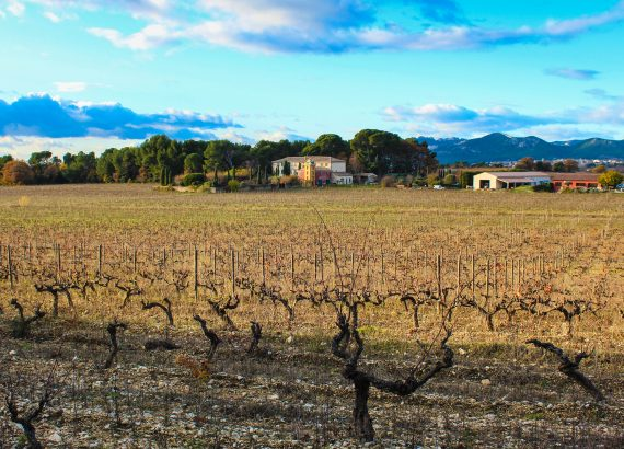 Rhonetal Ventoux Weinreise